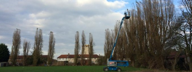 estate tree management from Shire Tree Care - Reading
